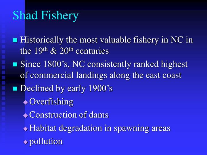 Shad Fishery