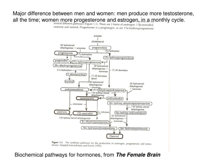 Major difference between men and women: men produce more testosterone, all the time; women more progesterone and estrogen, in a monthly cycle.