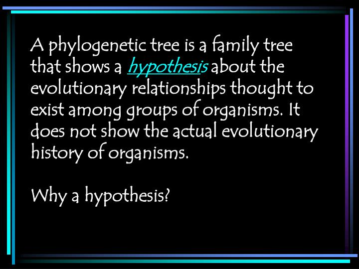 A phylogenetic tree is a family tree that shows a