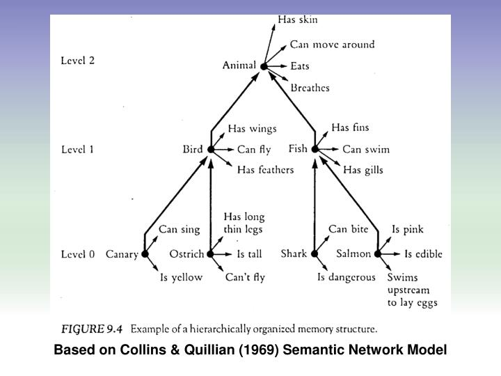 Based on Collins & Quillian (1969) Semantic Network Model