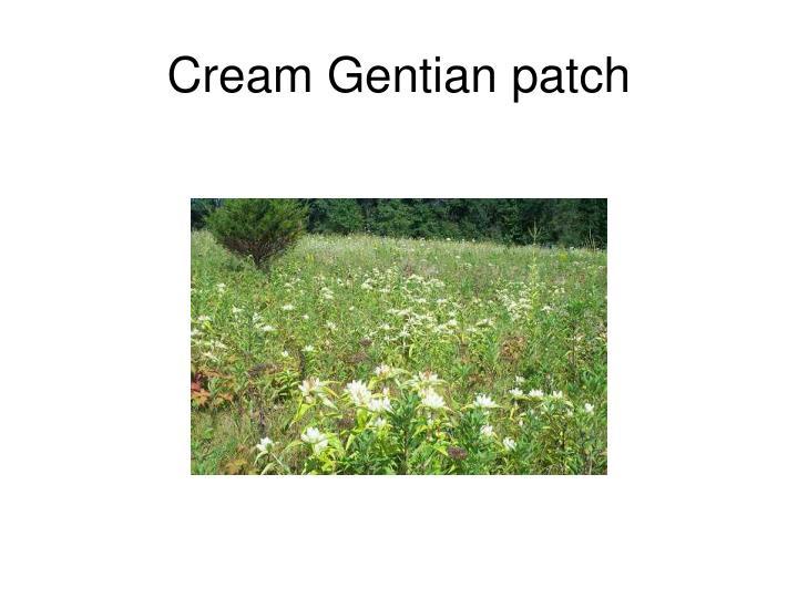 Cream Gentian patch