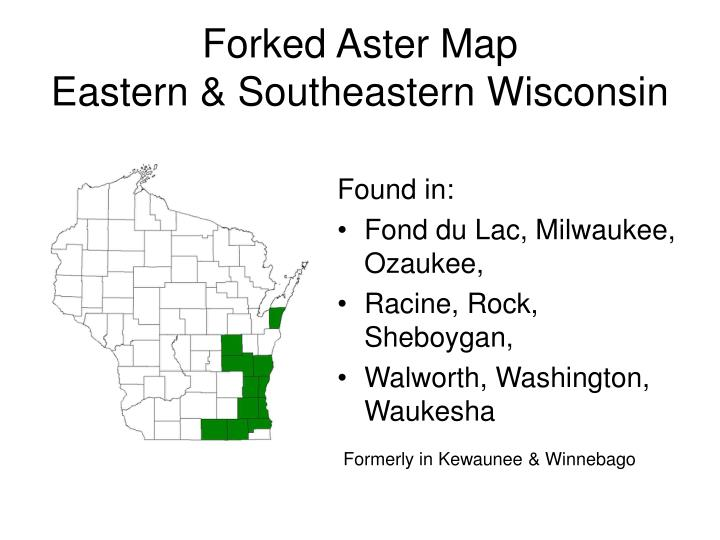 Forked Aster Map