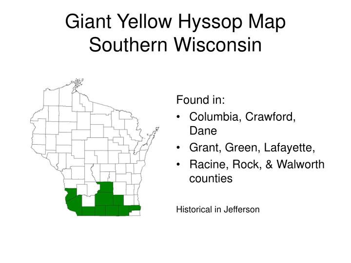 Giant Yellow Hyssop Map