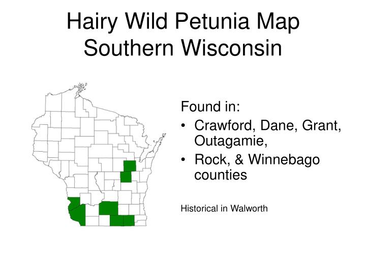 Hairy Wild Petunia Map