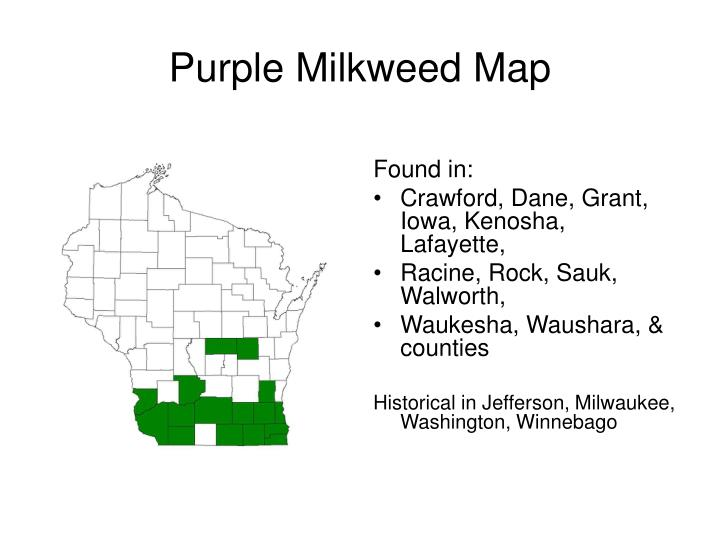 Purple Milkweed Map
