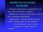 inspectia glandei mamare1