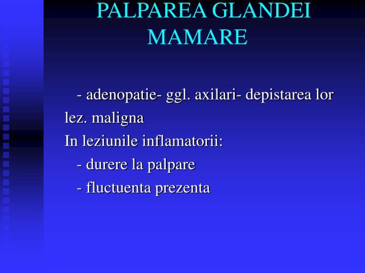PALPAREA GLANDEI       MAMARE