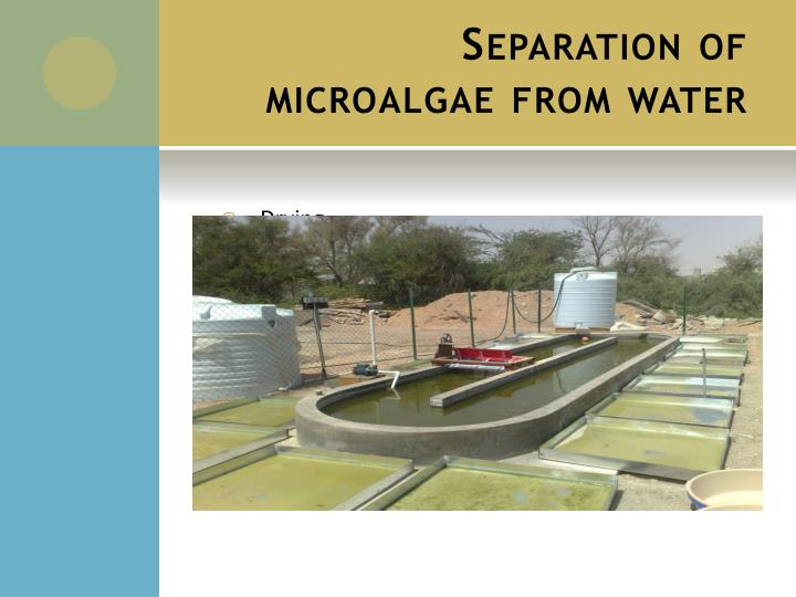 Separation of microalgae from water