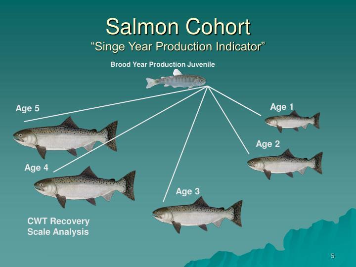 Salmon Cohort