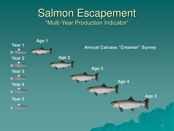 Salmon Escapement
