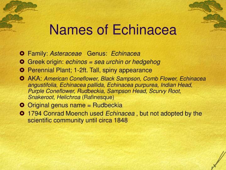 Names of Echinacea