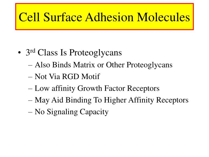 Cell Surface Adhesion Molecules