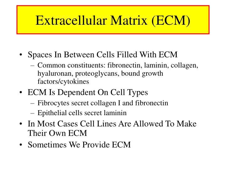 Extracellular Matrix (ECM)