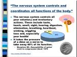 the nervous system controls and coordinates all functions of the body