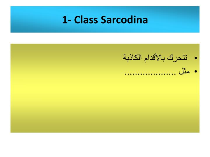 1- Class Sarcodina