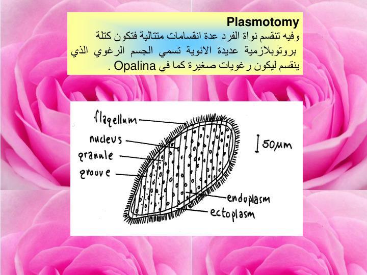 Plasmotomy