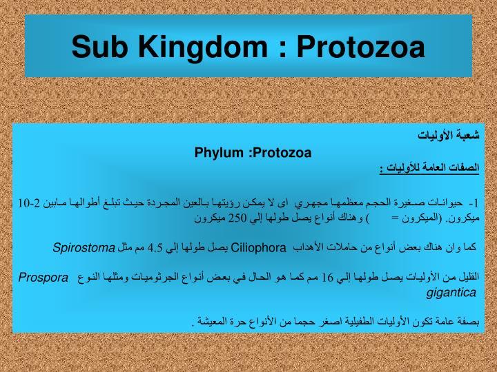 Sub Kingdom : Protozoa
