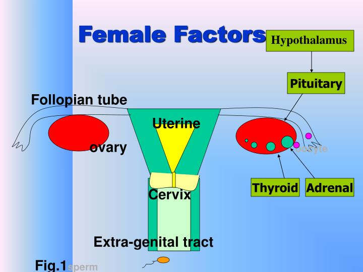 Female Factors
