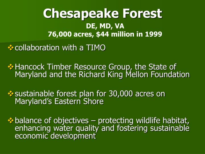 Chesapeake Forest