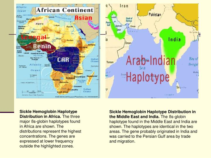 Sickle Hemoglobin Haplotype Distribution in Africa.