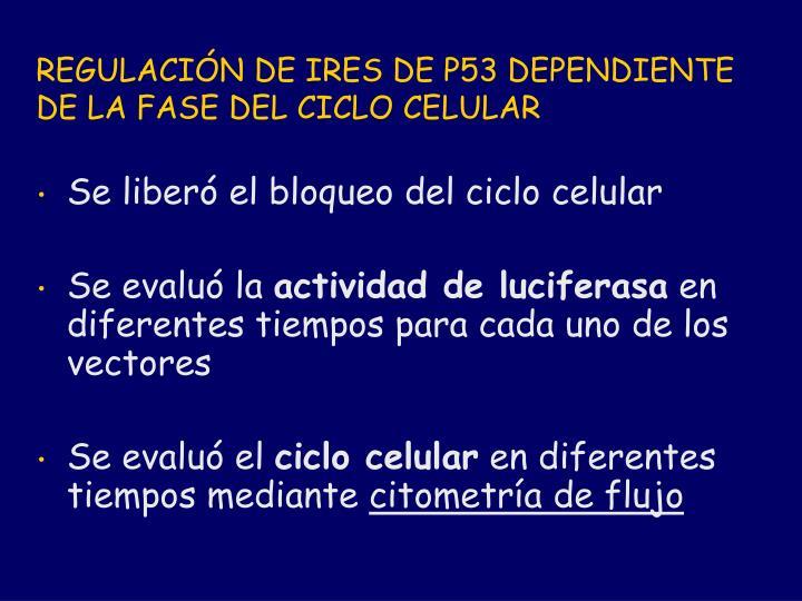 REGULACIÓN DE IRES DE P53 DEPENDIENTE DE LA FASE DEL CICLO CELULAR