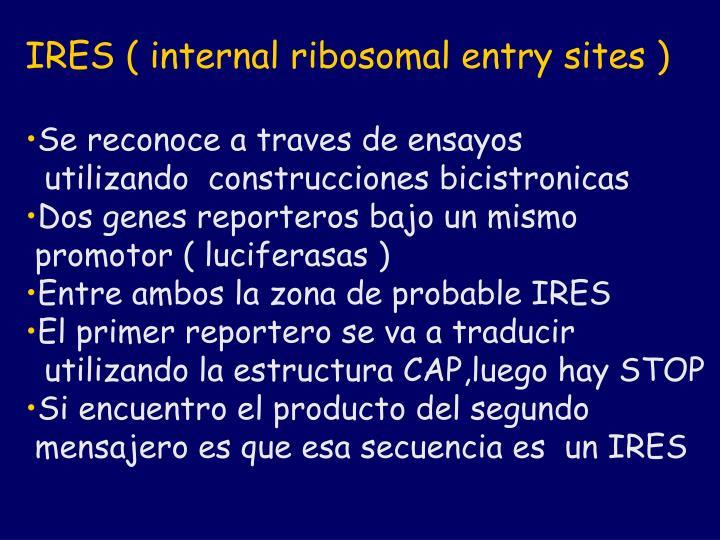 IRES ( internal ribosomal entry sites )