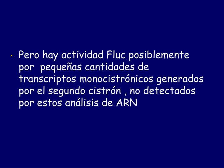 Pero hay actividad Fluc posiblemente por  pequeñas cantidades de transcriptos monocistrónicos generados por el segundo cistrón , no detectados  por estos análisis de ARN