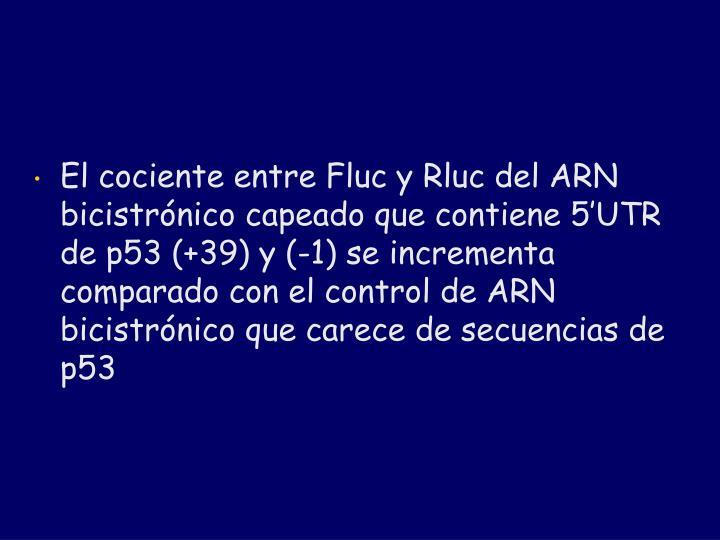 El cociente entre Fluc y Rluc del ARN bicistrónico capeado que contiene 5'UTR de p53 (+39) y (-1) se incrementa comparado con el control de ARN bicistrónico que carece de secuencias de p53