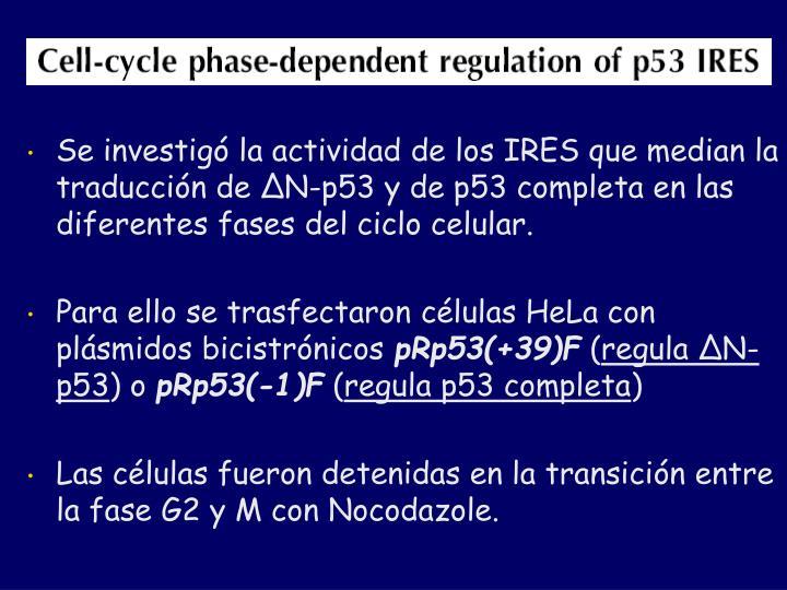Se investigó la actividad de los IRES que median la traducción de
