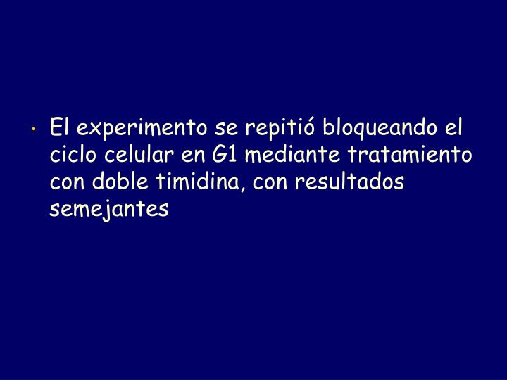 El experimento se repitió bloqueando el ciclo celular en G1 mediante tratamiento con doble timidina, con resultados semejantes