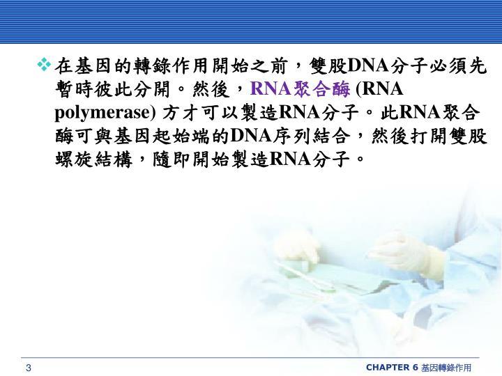 在基因的轉錄作用開始之前,雙股