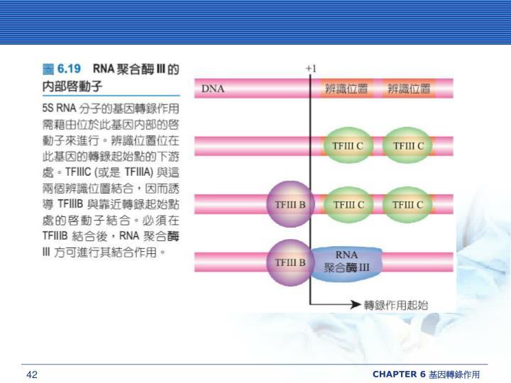 CHAPTER 6 基因轉錄作用