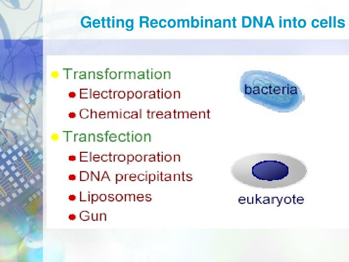 Getting Recombinant DNA into cells
