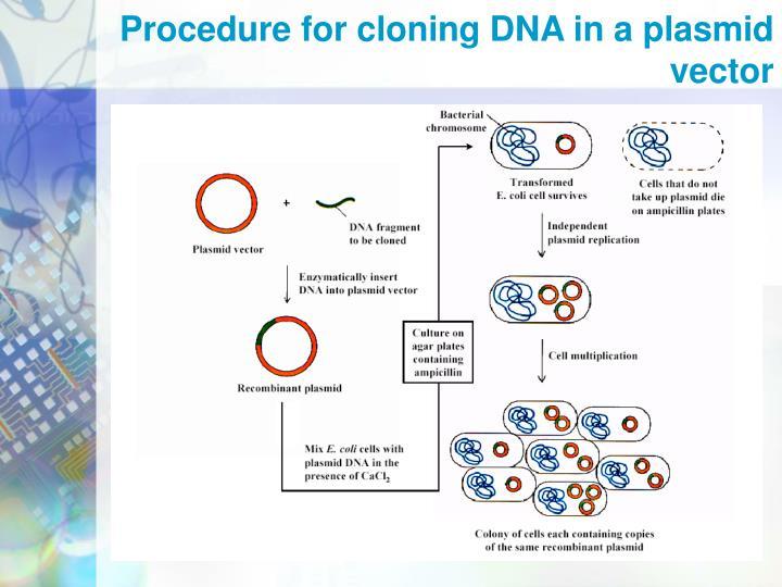 Procedure for cloning DNA in a plasmid vector