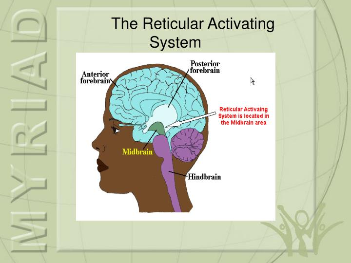 The Reticular Activating