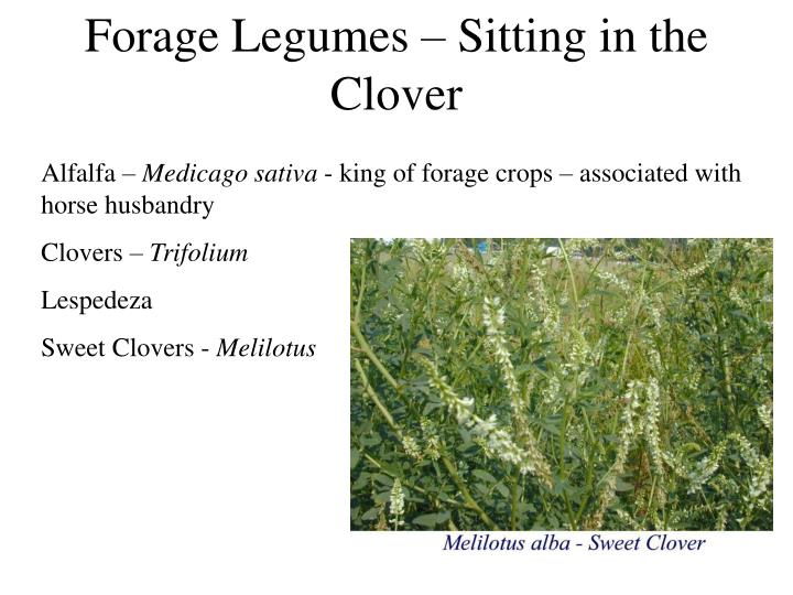Forage Legumes – Sitting in the Clover