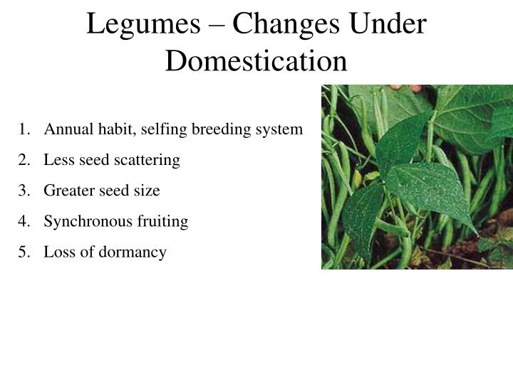 Legumes – Changes Under Domestication