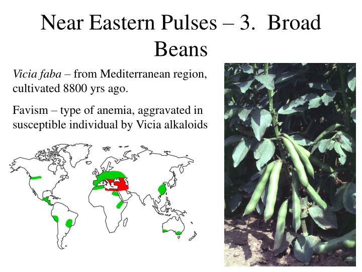 Near Eastern Pulses – 3.  Broad Beans