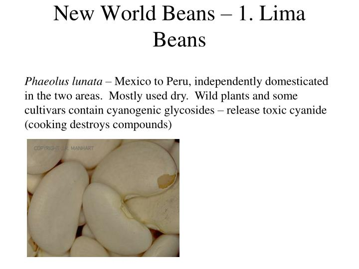 New World Beans – 1. Lima Beans