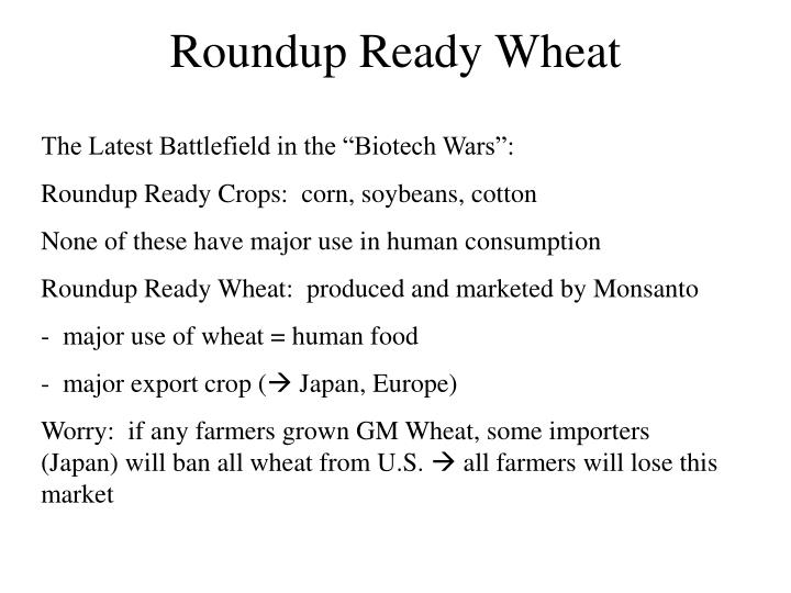 Roundup Ready Wheat