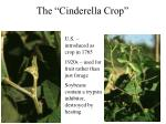 the cinderella crop2