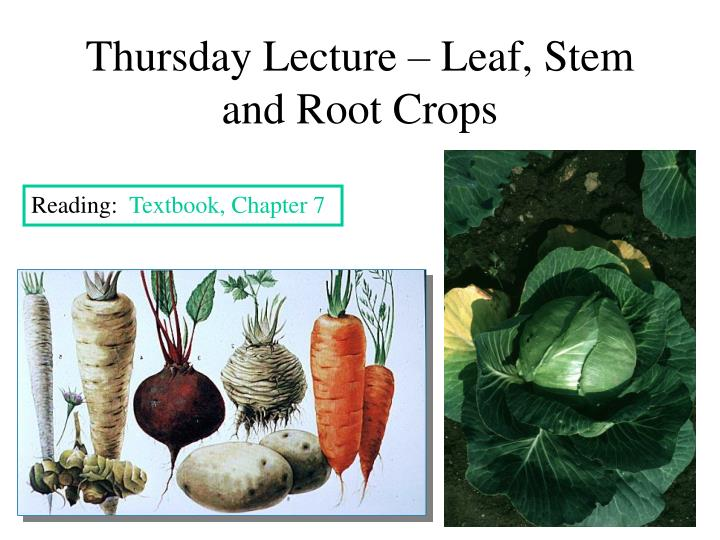 Thursday Lecture – Leaf, Stem and Root Crops