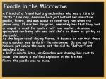 poodle in the microwave1