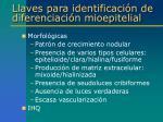 llaves para identificaci n de diferenciaci n mioepitelial