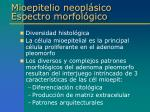 mioepitelio neopl sico espectro morfol gico