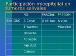 participaci n mioepitelial en tumores salivales