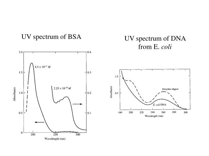 UV spectrum of BSA