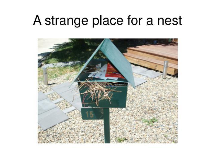 A strange place for a nest