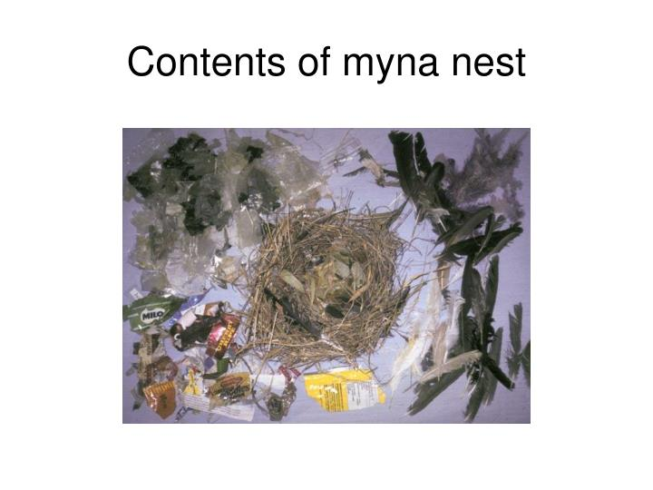 Contents of myna nest