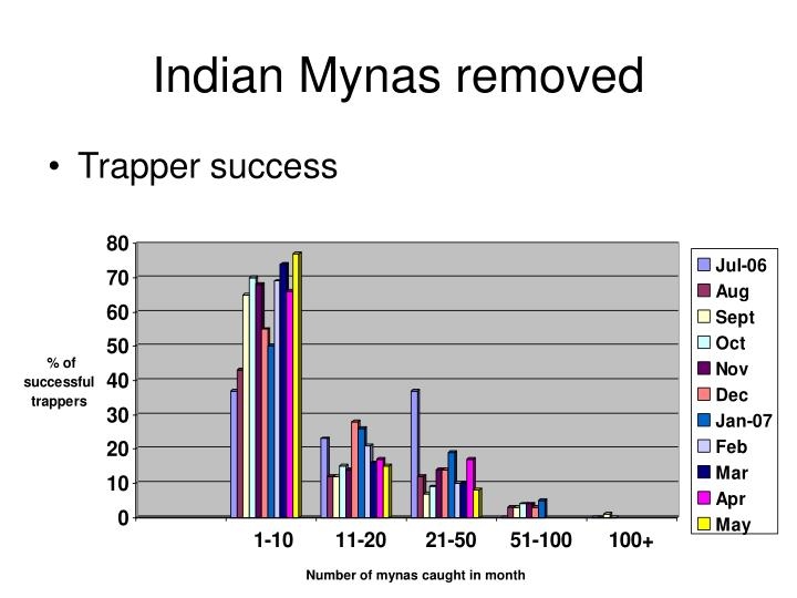 Indian Mynas removed